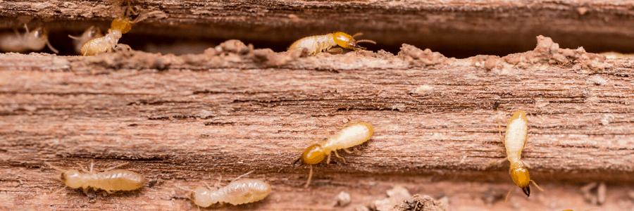 Termite barrier brisbane