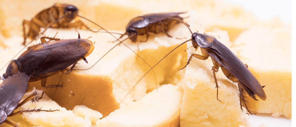 cockroach-control-brisbane