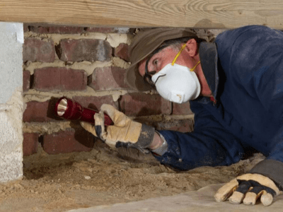 Building-pest-inspection-brisbane