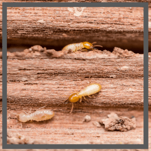 Termite management brisbane ipswich logan