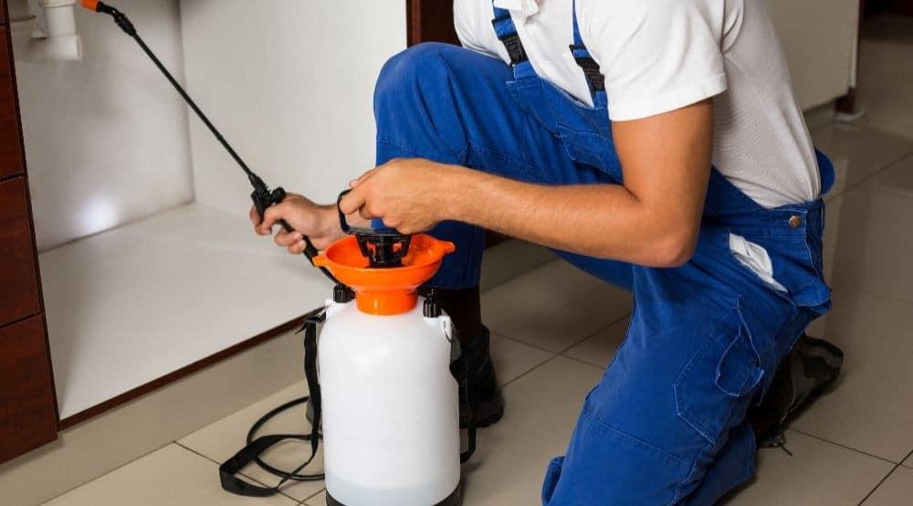 spray_for_pests_brisbane
