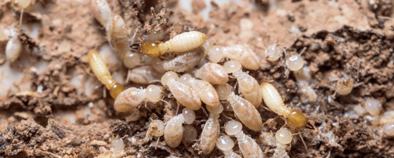 termitebarrierinstalledbrisbane