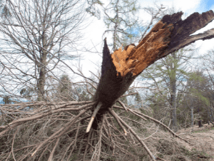 how termites get into a house - dead trees