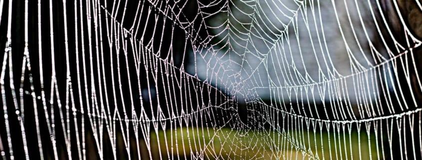 remove spiders