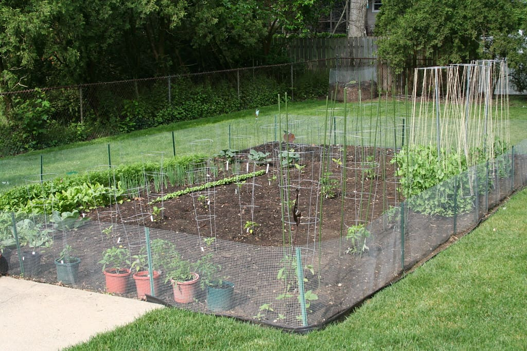 plan a sustainable garden