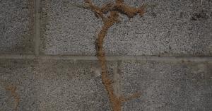termite mudding and tracks