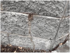 termites entering through crack in bricks