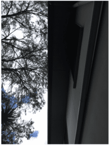 tree branches overhang