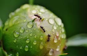 ants moisture