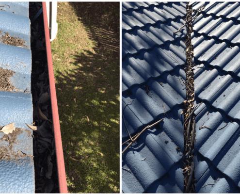 debris in gutters