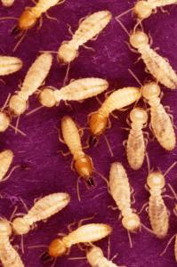 white ant stock photo
